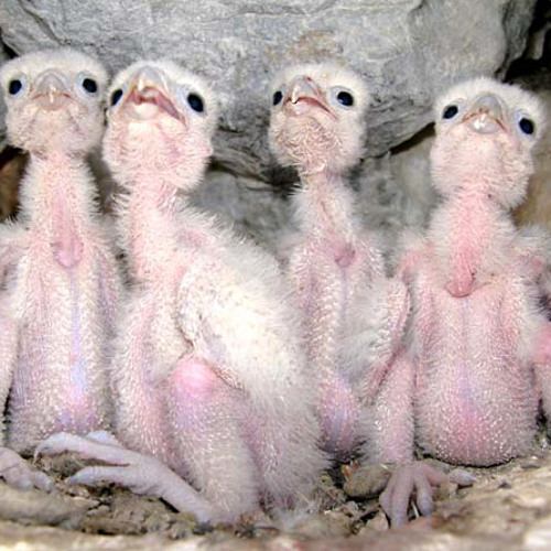 Featherless Birds