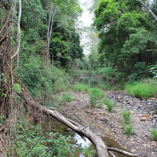 Summer in The Australian Bush