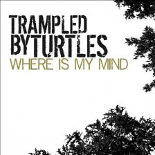 Trampled by Turtles - Where Is My Mind (Pink Floyd Cover)