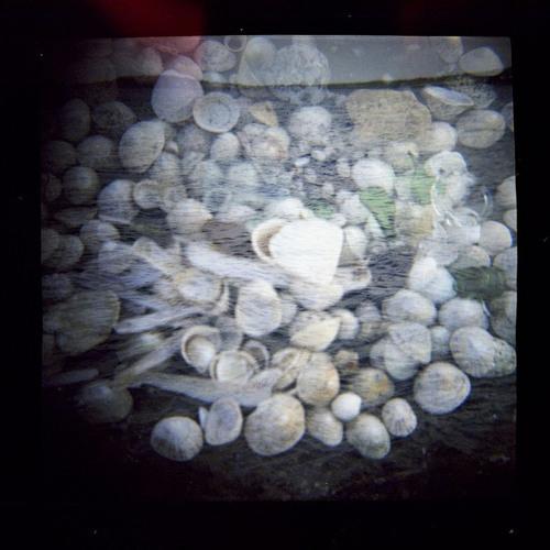 aphrodite's shell
