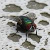 Durhaka - the fly.mp3