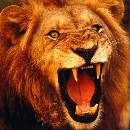 Drop lion