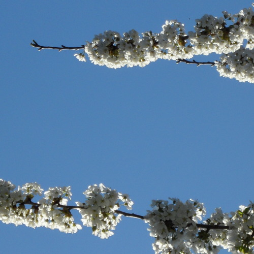 Primavera (Springtime)
