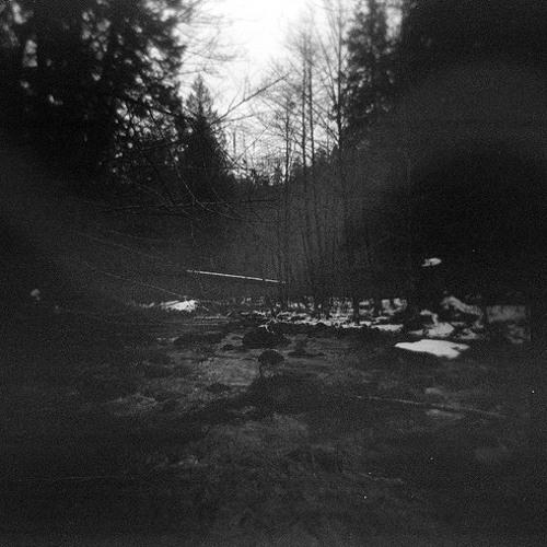 Dark Ambient Forest - Hatred Echoing Through the Trees [DL in Description]