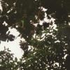 Prace - Opus 1 - Dubnova