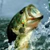 Bassnectar - Bass Head (Defender Edit)