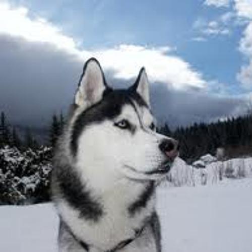 HANK  SNOW DOG MASTER MSJJPROJECT