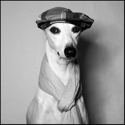 Dog Disco Is The New Human Disco (W Hotel MIX)