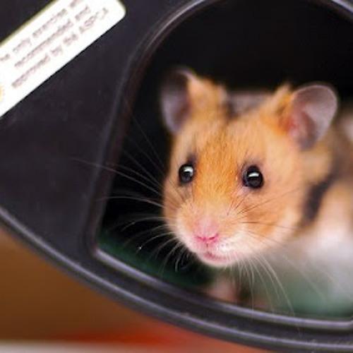 Hamster Bass