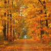 Autumn Leaves (Arrangement for Viola Da Gamba Quintet)