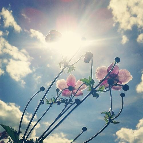 MOJIITO - BEAUTIFUL DAY