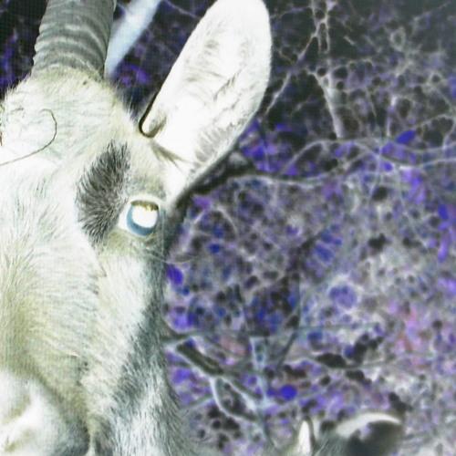 A Goat's Wetsuit