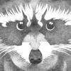 SRGJ - Raccoon Vol.1