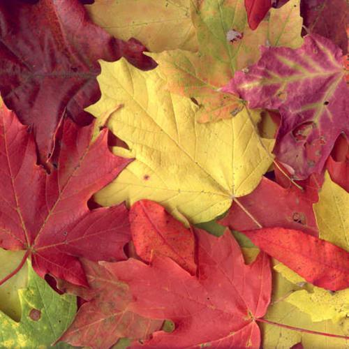 FOREST-autumn leaves(original)  @ Freegrant Music