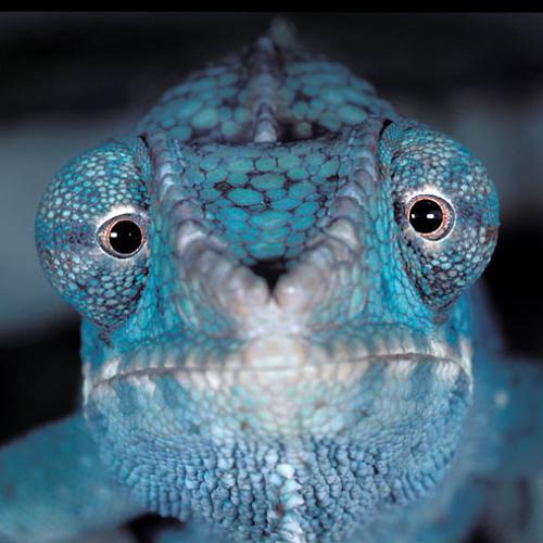 Chameleon - Melée (Free Download)