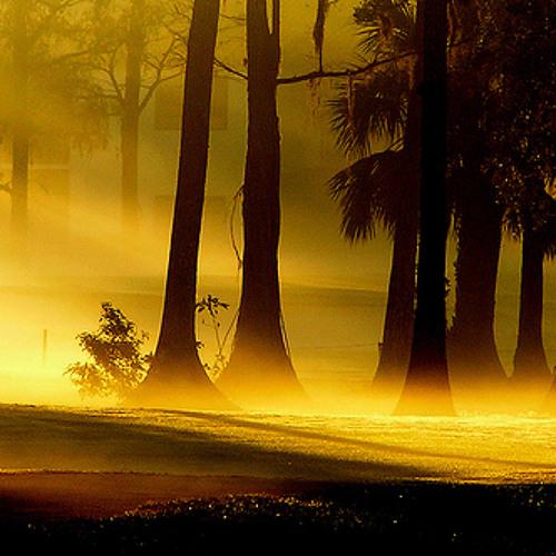 Morning fog - MaxSampla