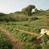 By hook or by crook, urban farmers plant their seeds  #SanFranciscoCrosscurrents