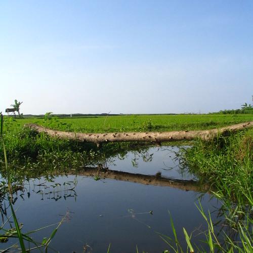 Indonesia Tanah Air Beta Intrumentalia (Chord E=do)