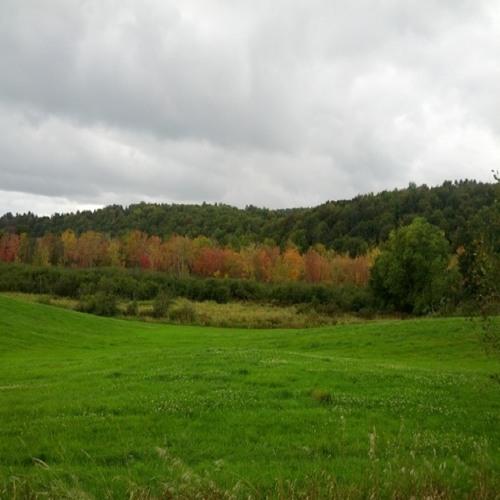 Vermont Foliage Begins. Craftsbury, Sept. 15