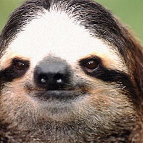 Sloth (Original 'Tasty' Mix) PREVIEW