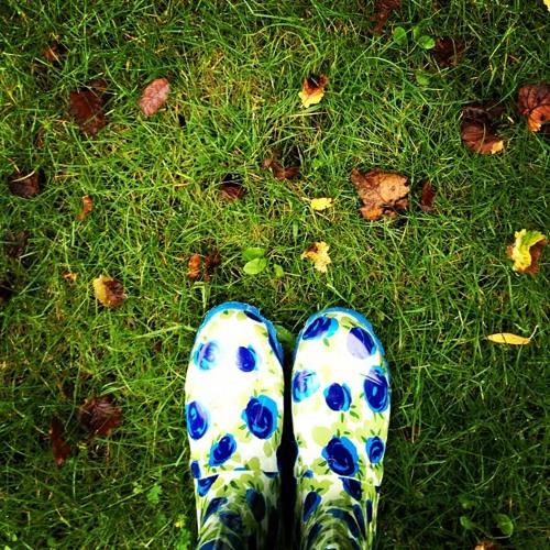 Sasha Anastasov - Autumn Walk