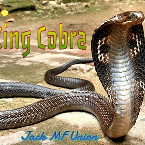 Jack MF Union - King Cobra