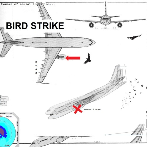 vasiabratchuk - Bird strike (acoustic)