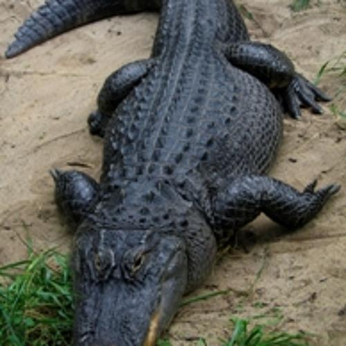 Aligator (Ramsoir, Brito & Chokane)
