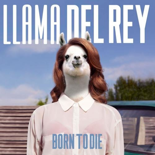 Born To Die (Lana Del Rey Cover)