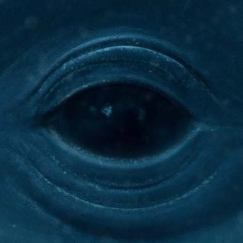 """Frank Ocean """"Blue Whale"""""""