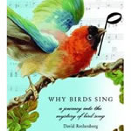 WhyBirdsSing David Rothenberg
