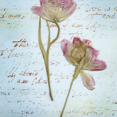 The Inner Life and Loves of Pressed Flowers Forgotten