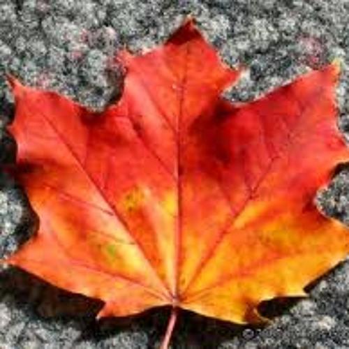 Erste Herbstgefühle mixed by Wellenreiter 30.09.2012