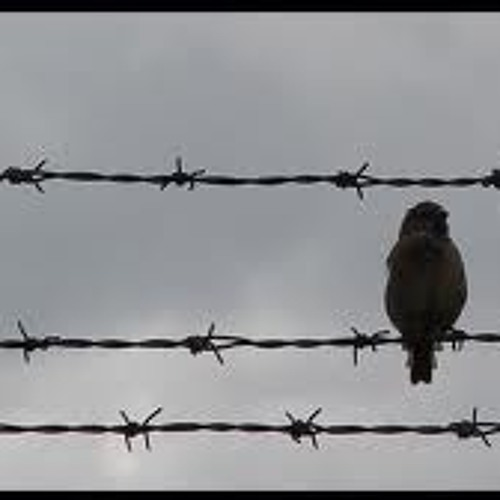 bird upon a wire