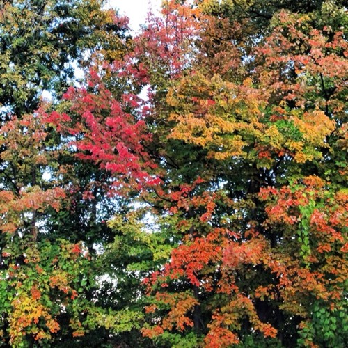 Vermont Foliage Report: Oct. 1