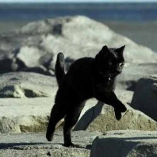Running Silent cat