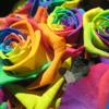 True Colors (feat. JC Semaj & Dylan Moore)