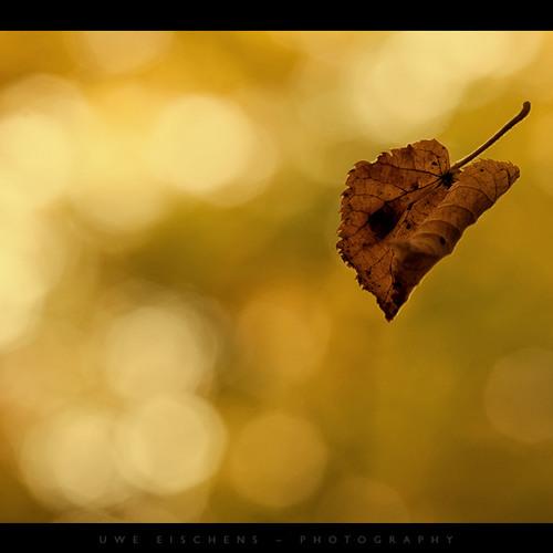 October - Detz