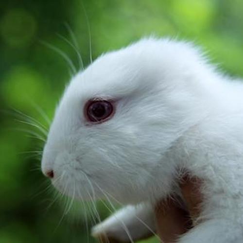 Psylotron - Fukushima's Earless Bunny