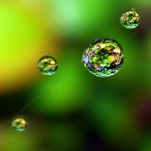 Jadiletta - Green