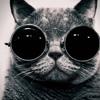 Apokaliptik - I'm a kitty cat! (miAAouuuu!!!!)
