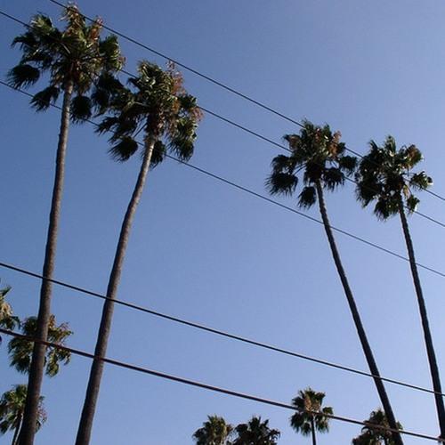 Sunshine & Power Lines