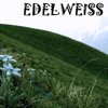 Edelweiss (Sound Of Music) Cover By Janhavee