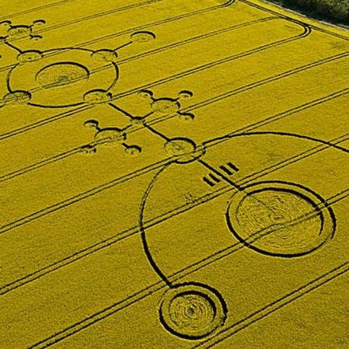 SirCut - yellow fields