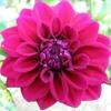 Toxic Flowers - (Trus'me ReRubWorkOut)