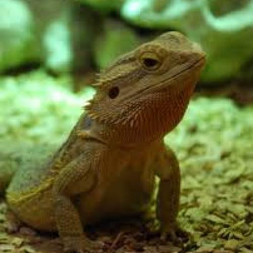 Reptile (clip)
