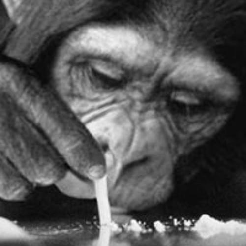 Jonkey . Monkey