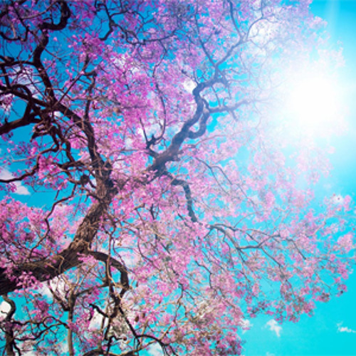 Sence of Spring