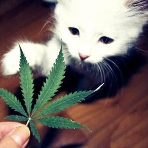Kitty-Stoner Mix