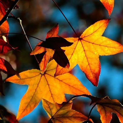 mon automne doré - Oktober 2012